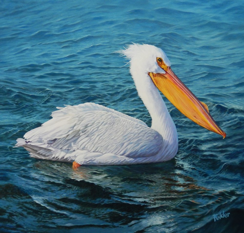 White Pelican on a Windy Day