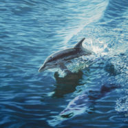 Dolphin in the Wake
