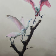 Painting of Roseate Spoonbills in a Tree in oil on canvas by Larry Felder | Felder Gallery