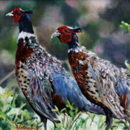 oil painting of pheasant by ric dentinger | Felder Gallery
