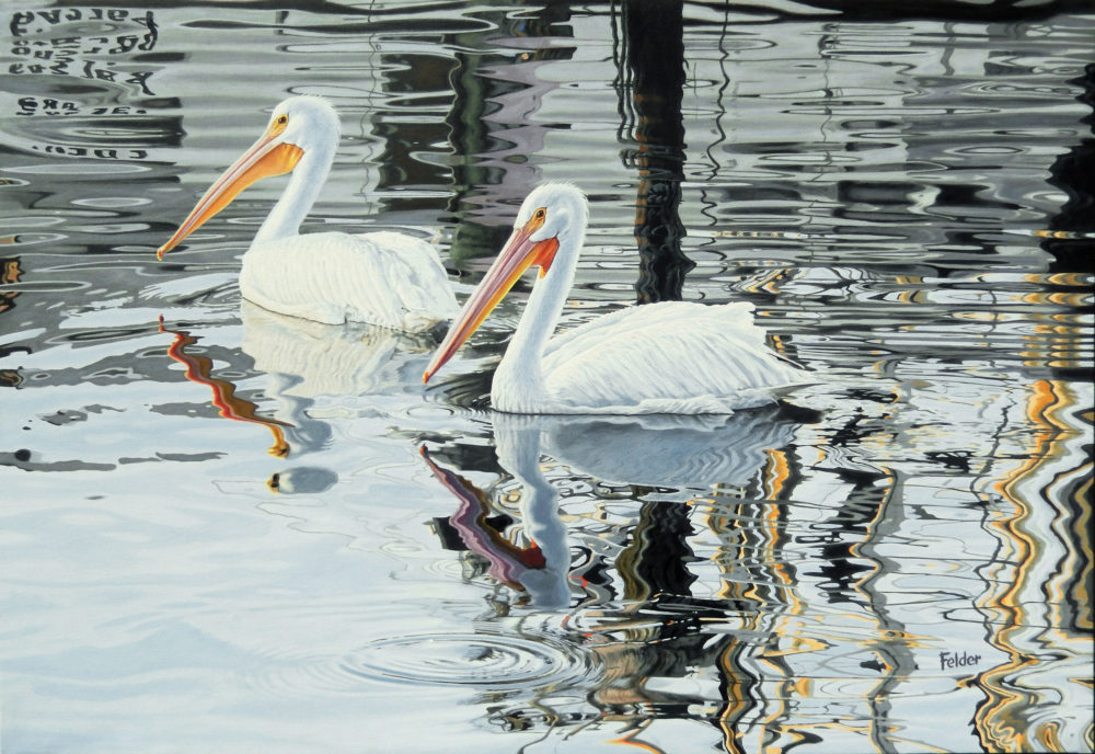 oil painting of white pelicans by larry felder | Felder Gallery