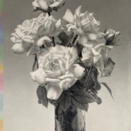 still life drawing of flowers by bill vuksanovich | Felder Gallery